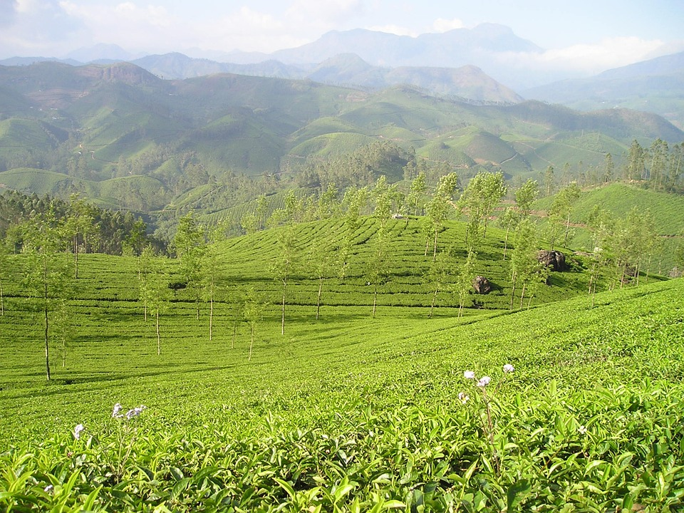 世界茶業大會暨2021年世博會聚集了茶業領袖