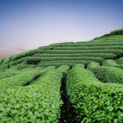 moc-chau-tea-hills-2094184_960_720