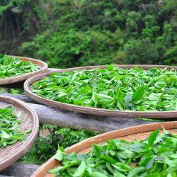 sun-tea-2474281_1920